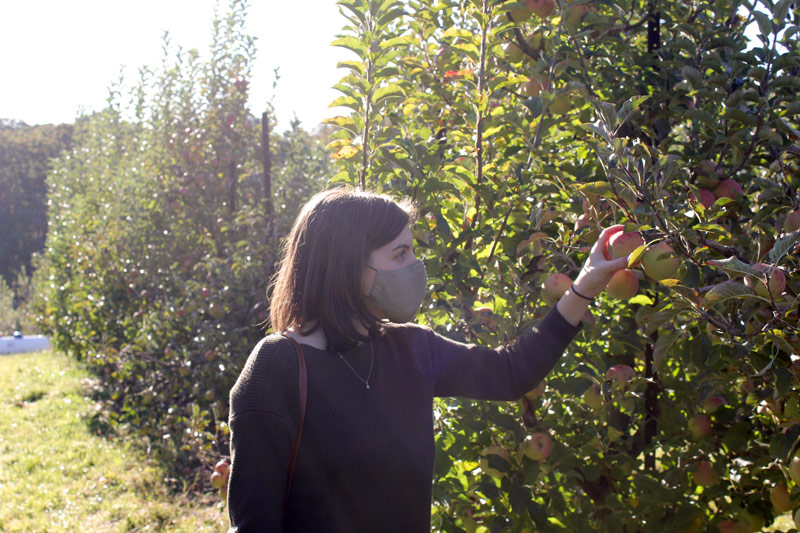 Maggie picking apples at Apple Hill Orchard